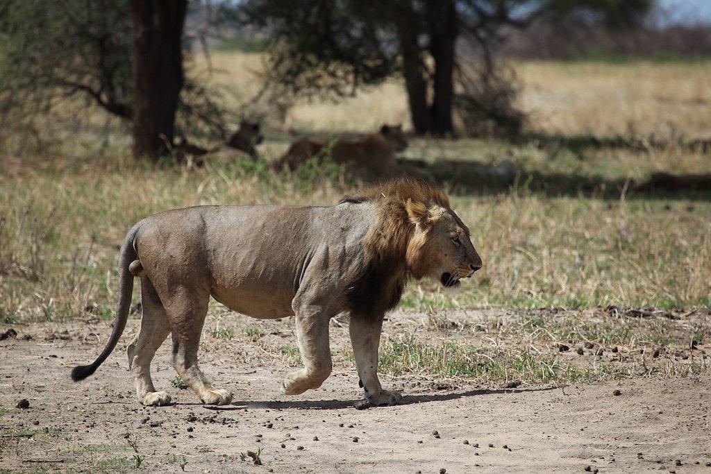 Tanzanie (2017)